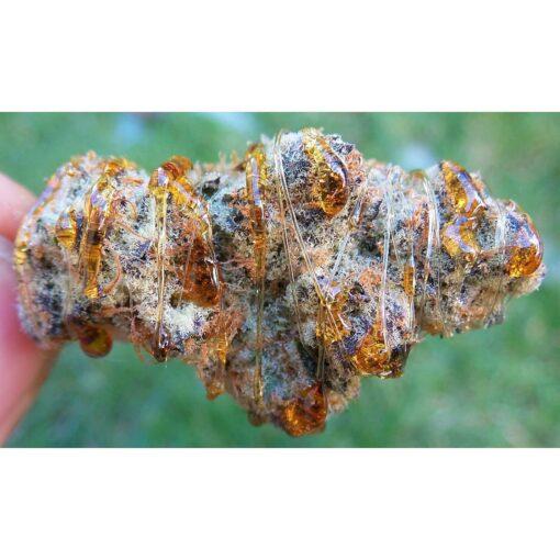 Buy moonrock strain, moon rock, moon rock bud, moon rock weed, moon rock weed for sale, Moon Rocks